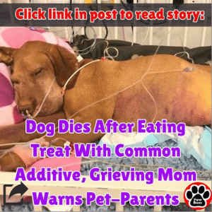 Click, Dogs, and Food: Click link in post to read storys  Dog Dies After Eating  Treat With Common  Additive, Grieving Mom  Warns Pet-Parents  Paw  Buzz This common ingredient found in many popular food items is lethal for our dogs.  ❤ Read more 👉 http://www.pawbuzz.com/ruby-artificial-sweetener/
