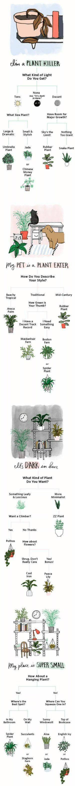 Funny, Money, and Spider: clim a PLANT KILLER  What Kind of Light  Do You Get?  None  See it's Dark  In Here  Tons  Decent  Have Room for  Major Growth  What Size Plant?  Large &  Dramatic  Small &  Stylish  Sky's the  Limit!  Nothing  Too Giant  Umbrella  Plant  Rubber Snake Plant  Plant  Jade  or  Chinese  Money  Plant   久똑  mgPETa a PLANT EATER  How Do You Describe  Your Style?  Beachy  Tropical  Traditional  Mid-Century  How Green is  Your Thumb?  Rubber  Plant  Areca  Palm  I Have a  l Need  Decent Track Something  Record  Easy  Maidenhair  Fern  Boston  Fern  Spider  Plant   What Kind of Plant  Do You Want?  Something Leafy  & Luscious  More  Minimalist  Want a Climber?  ZZ Plant  Yes  No Thanks  Pothos  How about  Flowers?  Shrug. Don't Yes!  Really Care Bonus!  Cast  Iron  Peace  Lily   my plare o SUPER SMALL  How About a  Hanging Plant?  Yes!  No!  Where's the  Best Spot?  Where Can You  Squeeze One In?  . MOn My windowsil  Sunny  Windowsi Bookcase  Top of  Bathroom  Wall  Spider Succulents Aloe English Ivy  Plant  Pothos  Staghorn  Fern  Jade herbwicc:  plantinghuman:  Funny way to find out which plant you might like to buy. Source:  apartmenttherapy.com  FOR MY FOLLOWERS THAT HAVE DIFFICULTY CARING FOR PLANTS AND ASK WHAT THEY SHOULD BUY, THIS IS REALLY GREAT!!