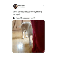 sound on for pure joy (@clintfalin on Twitter - @labradoggerz): Clint Falin  @ClintFalin  those dance classes are really starting  to pay off.  (feat. labradoggerz on IG) sound on for pure joy (@clintfalin on Twitter - @labradoggerz)