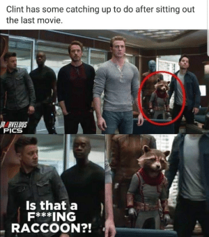 Don't be racist now…….. by SkrooImperator MORE MEMES: Clint has some catching up to do after sitting out  the last movie.  RVELOUS  PICS  Is that a  F***ING  RACCOON?! Don't be racist now…….. by SkrooImperator MORE MEMES