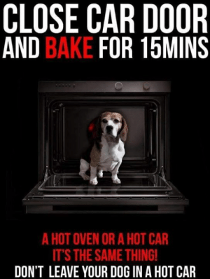 Being Alone, Animals, and Cars: CLOSE CAR DOOR  AND BAKE FOR 15MINS  A HOT OVEN OR A HOT CAR  IT'S THE SAME THING  DON'T LEAVE YOUR DOG IN A HOT CAR PLEASE SHARE!!  The K-9 Angels Hot Dogs in Cars campaign!  K-9 Angels want to strongly warn the public against leaving dogs in hot cars this spring and summer. Even leaving a dog in a car for 10 minutes can result in severe dehydration and baking, followed by death.  Parked cars are deathtraps for dogs: On a 78 degree day, the temperature inside a parked car can soar to between 100 and 120 degrees in just minutes, and on a 90 degree day, the interior temperature can reach as high as 160 degrees in less than 10 minutes.  Animals can sustain brain damage or even die from heatstroke in just 15 minutes. No dog should ever be left in a car. Like a child should also never be left in a car. Remember they are wearing a thick woolly coat and are unable to sweat like a human. Beating the heat is extra tough for dogs because they can only cool themselves by panting and by sweating through their paw pads.  If you see a dog left alone in a hot car, take down the car's colour, model, make, and licence plate number. Have the owner paged in the nearest buildings, or call local humane authorities or police. Have someone keep an eye on the dog. Don't leave the scene until the situation has been resolved.  If the authorities are unresponsive or too slow and the dog's life appears to be in imminent danger, find a witness (or several) who will back up your assessment, take steps to remove the suffering animal from the car, and then wait for authorities to arrive.  Watch for heatstroke symptoms such as restlessness, excessive thirst, thick saliva, heavy panting, lethargy, lack of appetite, dark tongue, rapid heartbeat, fever, vomiting, bloody diarrhea, and lack of coordination. If a dog shows any of these symptoms, get him or her out of the heat, preferably into an air-conditioned vehicle, and then to a veterinarian immediately. If you are unable to transport the dog yourself, take him or her into an air-conditioned building if possible and call animal control: Tell them it is an emergency.  Provide water to drink, and if possible spray the dog with a garden hose or immerse him or her in a tub of cool (but not iced) water for up to two minutes in order to lower the body temperature gradually. You can also place the dog in front of an electric fan. Applying cool, wet towels to the groin area, stomach, chest, and paws can also help. Be careful not to use ice or cold water, and don't overcool the animal.  Do not take your dog out with you if you need to leave it in a car for 1-2 mins MAX, always park your car in full cool shade with the sun roof wide open and all windows open by a few inches.  Next time you have trouble relating to this, put a huge heavy coat on, several jumpers and lock yourself in your green house for 20 minutes on a hot summer's day…. this is how your dog feels.  DO NOT LEAVE DOGS IN HOT CARS………….  K-9 Angels  (Thank you to PETA for some of the information used by K-9 Angels in the wording of this campaign)