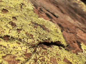 Cool, Think, and Lichen: Close up of lichen, I think it came out pretty cool
