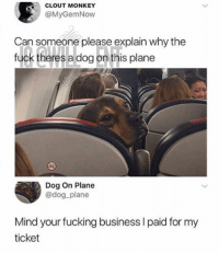 😂He is living his best life: CLOUT MONKEY  @MyGemNow  Can someone please explain why the  fuck theres a dog on this plane  Dog On Plane  @dog plane  Mind your fucking business I paid for my  ticket 😂He is living his best life