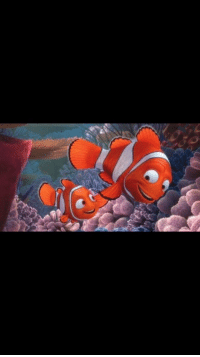42 Wallaby Way Sydney