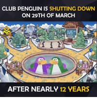Video Games, Penguin, and Penguins: CLUB PENGUIN IS  SHUTTING DOWN  ON 29TH OF MARCH  PENGUIN  MING MEMES  AFTER NEARLY 12 YEARS Devastated