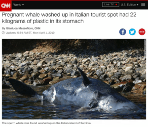 When Sperm Whales Consume CNN 🌎 Better to Consume Sperm Instead Like DON LEMON 🍋: CN World+  Pregnant whale washed up in Italian tourist spot had 22  kilograms of plastic in its stomach  Live TV  U.S. Edition +-  By Gianluca Mezzofiore, CNN  O Updated 5:54 AM ET, Mon April 1, 2019  LA  The sperm whale was found washed up on the Italian island of Sardinia. When Sperm Whales Consume CNN 🌎 Better to Consume Sperm Instead Like DON LEMON 🍋