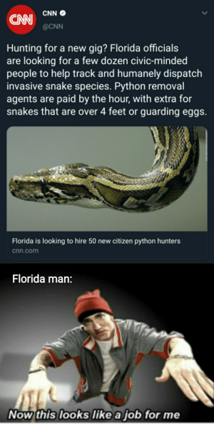 Florida men.. assemble!: CNN  CN@CNN  Hunting for a new gig? Florida officials  are looking for a few dozen civic-minded  people to help track and humanely dispatch  invasive snake species. Python removal  agents are paid by the hour, with extra for  snakes that are over 4 feet or guarding eggs.  Florida is looking to hire 50 new citizen python hunters  cnn.com  Florida man:  Now this looks like a job for me Florida men.. assemble!