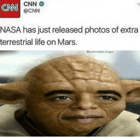 cnn.com, Funny, and Life: CNN  @CNN  NASA has just released photos of extra  terrestrial life on Mars.  @overcooked.doggo I see . . (Oc) . Backup: @raw.doggo Art: @overcooked.art . . meme memes comedy humour humor joke funny cringe doggo dog whyyoureadinthese
