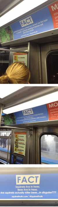 Birthday, Facts, and Subway: co  Statisticlly speaking, at least one person' on this train  is actually 7 squirrels wearing a human suit.  FACT  at  TVs  ap  Don't be a victim  squineltruth.com. #SquirreTruth  In Case of Emer  ollow Instructions  on Train  MO  FACT  couche  gardenin  TVs, exerci  Squirels have never, ever wished you a Happy Birthday  like, not even once  robably becouse squirrel  ls are inconsiderate, selfish monsters.  In Case of Emergency  ollo Instructions  Do not Open Doors  FACT  Squirrels live in trees.  Bees live in trees.  Are squirrels actually killer bees...in disguise???  quirreltruth.com   <p>Random Squirrel Facts On The Subway.</p>