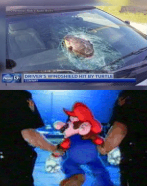 Conway, News, and Turtle: Coartesy: RobAuto Body  DRIVER'S WINDSHIELD HIT BY TURTLE  CONWAY  News 13