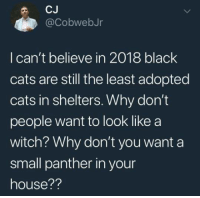A Witch: @CobwebJr  I can't believe in 2018 black  cats are still the least adopted  cats in shelters. Why don't  people want to look like a  witch? Why don't you want a  small panther in your  house??
