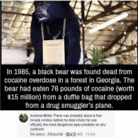 Memes, Party, and Animal: COCAINE BA  In 1985, a black bear was found dead from  cocaine overdose in a forest in Georgia. The  bear had eaten 76 pounds of cocaine (worth  $15 million) from a duffle bag that dropped  from a drug smuggler's plane.  Andrew Miller There was probably about a five  minute window before he died where he was  officially the most dangerous apex predator on any  continent  imi place Raspunde 660 14 ore What a legend. A real party animal.