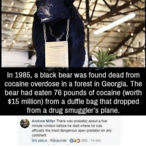 Most Dangerous: COCAINE BEAN  In 1985, a black bear was found dead from  cocaine overdose in a forest in Georgia. The  bear had eaten 76 pounds of cocaine (worth  $15 million) from a duffle bag that dropped  from a drug smuggler's plane.  Andrew Miller There was probably about a five  minute window before he died where he was  officially the most dangerous apex predator on any  continent  imi place Răspunde Og 660 . 14 ore