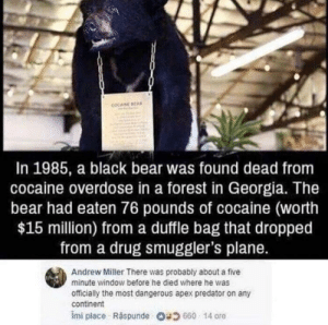 this made my day. by TetraULTRA MORE MEMES: COCAINE EA  In 1985, a black bear was found dead from  cocaine overdose in a forest in Georgia. The  bear had eaten 76 pounds of cocaine (worth  $15 million) from a duffle bag that dropped  from a drug smuggler's plane.  Andrew Miller There was probably about a five  minute window before he died where he was  officially the most dangerous apex predator on any  continent  imi place . Răspunde 680 14 ore this made my day. by TetraULTRA MORE MEMES