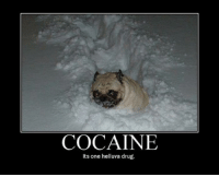 Hope your Monday speeds by uneventfully, stay warm friends!: COCAINE  Its one helluva drug. Hope your Monday speeds by uneventfully, stay warm friends!