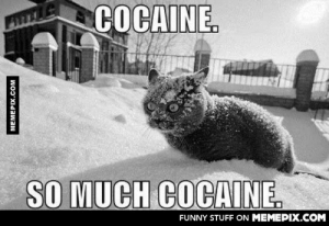 Cocaine is a hell of a drugomg-humor.tumblr.com: COCAINE.  SO MUCH COCAINE.  FUNNY STUFF ON MEMEPIX.COM  MEMEPIX.COM Cocaine is a hell of a drugomg-humor.tumblr.com