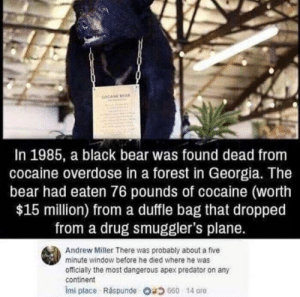Apex, Bear, and Black: COCANE BEA  In 1985, a black bear was found dead from  cocaine overdose in a forest in Georgia. The  bear had eaten 76 pounds of cocaine (worth  $15 million) froma duffle bag that dropped  from a drug smuggler's plane.  Andrew Miller There was probably about a five  minute window before he died where he was  officially the most dangerous apex predator on any  continent  Imi place Ráspunde O4660 14 ore That 5 minute window