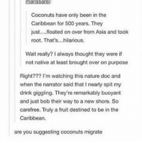 Ironic, Nature, and Hilarious: Coconuts have only been in the  Caribbean for 500 years. They  just....floated on over from Asia and toolk  root. That's...hilarious.  Wait really? I always thought they were if  not native at least brought over on purpose  Right??? l'm watching this nature doc and  when the narrator said that I nearly spit my  drink giggling. They're remarkably buoyant  and just bob their way to a new shore. So  carefree. Truly a fruit destined to be in the  Caribbean  are you suggesting coconuts migrate