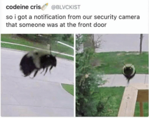 Camera, Codeine, and Got: codeine cris @BLVCKIST  so i got a notification from our security camera  that someone was at the front door This is my friend, Maya.