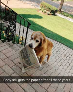 Cody is a devoted, good boye: Cody still gets the paper after all these years Cody is a devoted, good boye