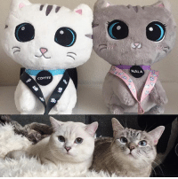 """Memes, 🤖, and Cat: COFFEE  NALA @nala_cat and I plush toys and lanyards available at www.nalacat.com Use coupon code """"extra15"""" for additional 15% off ❤️"""
