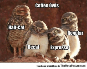Tumblr, Blog, and Coffee: Coffee Owls  Half-Caf  Regular  DecafExoresso  you should probably go to TheMetaPicture.com srsfunny:  Coffee Explained With Owls