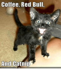 Cute, Memes, and Red Bull: Coffee, Red Bull,  And  Catllip  CANHA SCHEEZE URGER co M For more cute pics LIKE us at The Purrfect Feline Page
