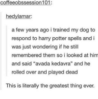 "Ironic, Avada Kedavra, and Bra: coffeeobssession 101:  hedylamar:  a few years ago i trained my dog to  respond to harry potter spells and i  was just wondering if he still  remembered them so i looked at him  and said ""avada kedavra"" and he  rolled over and played dead  This is literally the greatest thing ever. i want to fucking die i went to a bra specialist and nothing fucking fit me cause they are too fucking big (my boobs) yet they specialise in big bras can i die"