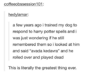 """Harry Potter, Amazing, and Avada Kedavra: coffeeobssession 101:  hedylamar:  a few years ago i trained my dog to  respond to harry potter spells and i  was just wondering if he still  remembered them so i looked at him  and said """"avada kedavra"""" and he  rolled over and played dead  This is literally the greatest thing ever. That is such an amazing idea"""
