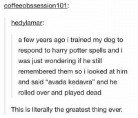 "Harry Potter, Good, and Avada Kedavra: coffeeobssession101:  hedvlamar:  a few years ago i trained my dog to  respond to harry potter spells and i  was just wondering if he still  membered them so i looked at him  re  and said ""avada kedavra"" and he  rolled over and played dead  3  This is literally the greatest thing ever. good dog"