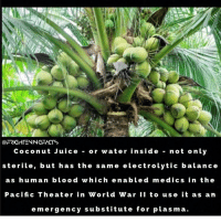 Juice, Memes, and World War II: COFRIGHTENNGFACTS  Coconut Juice or water inside  not only  sterile, but has the sam  electrolytic balance  a s human blood w hich enabled m e dics in the  Pacific Theater in World War II to use it as an  emergency substitute for plasma Nature is amazing :) chakabars famfoods