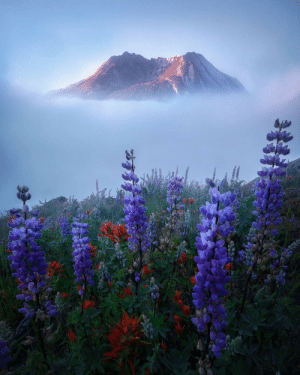 coiour-my-world: Mount St. Helens National Volcanic Monument | steveschwindt: coiour-my-world: Mount St. Helens National Volcanic Monument | steveschwindt