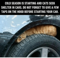 9gag, Cars, and Cats: COLD SEASON IS STARTING AND CATS SEEK  SHELTER IN CARS. DO NOT FORGET TO GIVE A FEW  TAPS ON THE HOOD BEFORE STARTING YOUR CAR Please keep that in mind⠀ @meowed cat winter 9gag