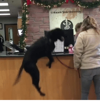 """Colorado, Hospital, and Never: Colorado State University """"I've never seen a dog so excited to be at the vet"""" 😂😂  Credit: Colorado State University Veterinary Teaching Hospital"""