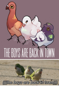 Target, Tumblr, and Blog: com  HE GOYS ARE BACE IN TOWN   ((the boys are back intown regaltrice:  They are here