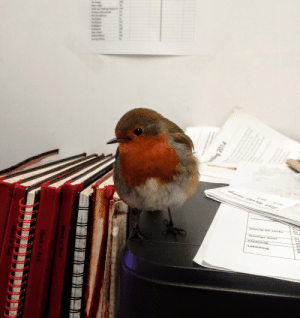 This robin sneaks into my office every day: Com mun ca  Cre  corks  Mould on  Cr  Shutt er do or  Clean ing  St  Labelling  ing 2014  Black n' Red  Black n' Red  Black n' Red This robin sneaks into my office every day