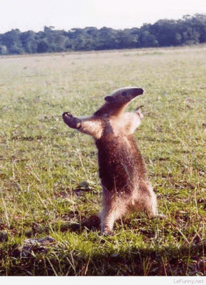 Funny, Animal, and Picture: Come at me, bro! – Funny Animal Picture