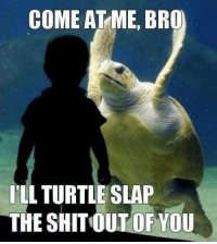 come at me: COME AT ME, BRO  ILL TURTLE SLAP  THE SHITOUT OF YOU