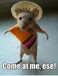 come at me: Come at me, ese!