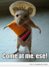 come at me: Come at me, ese!  THISI ISI DAMNLOLCOMI