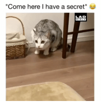 "Cute, Memes, and Bible: ""Come here I have a secret""  LAD  BIBLE So cute! 😂 Credit: @tsuru.nyan"