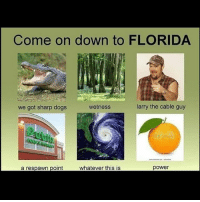 Bruh, Dogs, and Memes: Come on down to FLORIDA  we got sharp dogs  wetness  larry the cable guy  a respawn point  power Bruh akademiks comment section always has me dead
