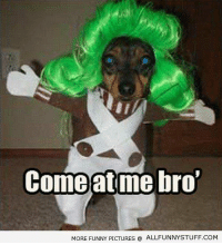 17 funny dog memes to start your morning: Comeatme  Comeatme bro  MORE FUNNY PICTURES  ALLFUNNYSTUFF.COM 17 funny dog memes to start your morning