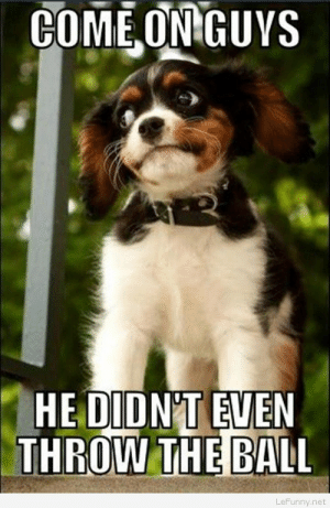 Dogs, Funny, and Images: COMEONGUVS  HE DIDNT EVEN  THROW THE BALL  LeFunny.net Funny dogs pictures and images