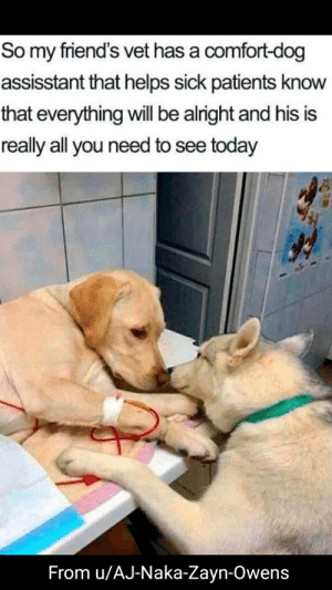 Comforting doggy: Comforting doggy