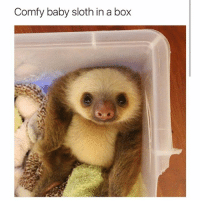 I want it (@hilarious.ted): Comfy baby sloth in a box I want it (@hilarious.ted)