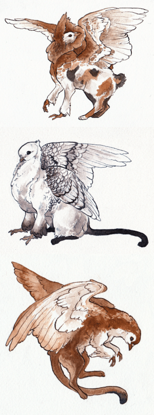 Finals, Target, and Tumblr: commanderholly:  combjellies:  Finals are done and I have time to doodle for myself, so… fancy griffins! Jacobin pigeon x Japanese bobtail Satinette pigeon x Siamese Lahore pigeon x Abyssinian   perfect   @fantasykai !!!