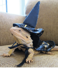 """Comment """"Please cast your spell on me, mr lizard wizard"""" for good luck and fortune.: Comment """"Please cast your spell on me, mr lizard wizard"""" for good luck and fortune."""