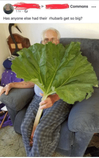 Wholesome, Commons, and Big: Commons  1 hr  Has anyone else had their rhubarb get so big? <p>Wholesome rhubarb</p>