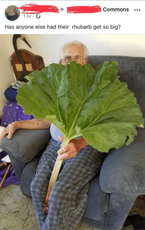 Memes, Tumblr, and Blog: Commons  1 hr  Has anyone else had their rhubarb get so big? positive-memes:  Wholesome rhubarb